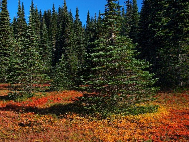 Fall colors along the Placid Lake Trail