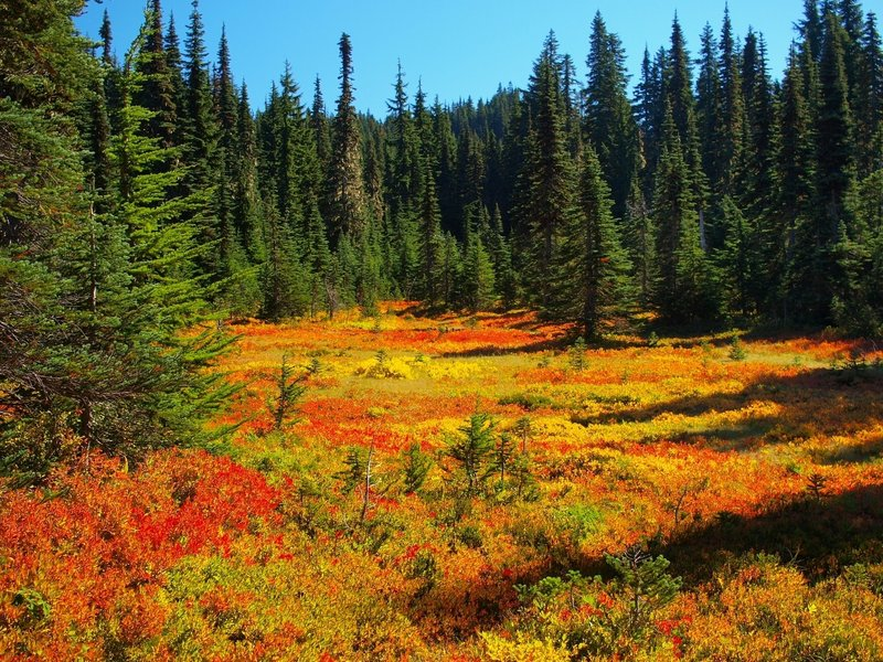 A meadow in Fall colors along the Lemei Trail