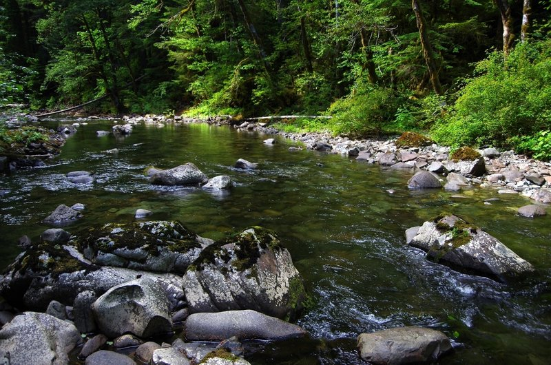 Siouxon Creek near the Wildcat Trail