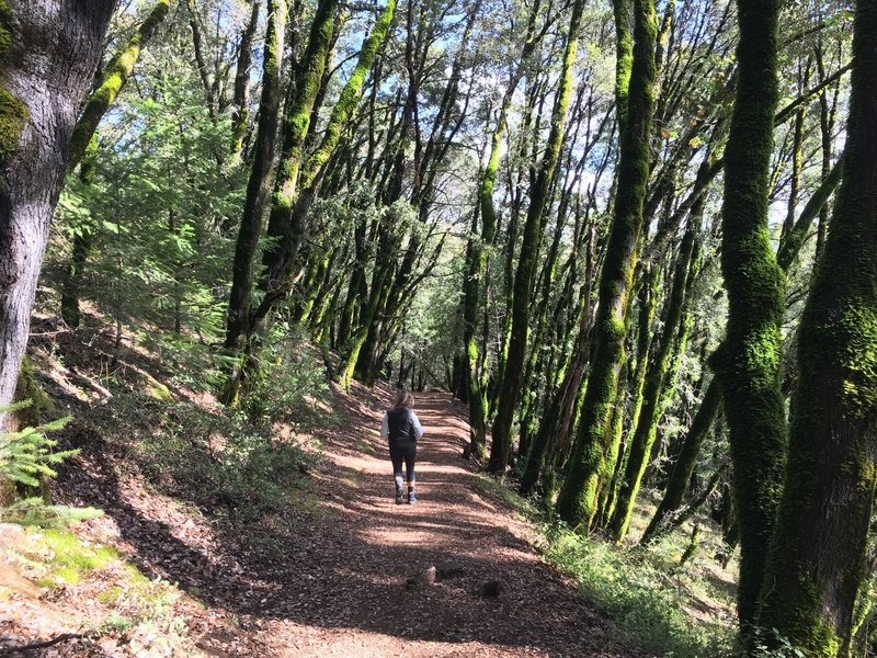 A few minutes after the trailhead going into the forest, away from freeway noise