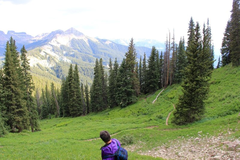 Descending through pine trees
