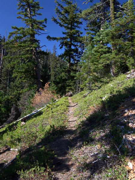 Ascending the Gumjuwac Trail #480