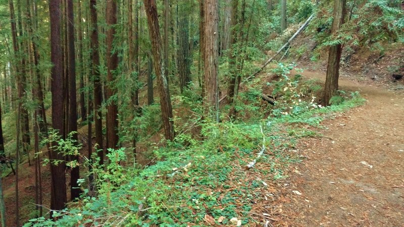 Cape Horn Trail winds along the steep, forested hillsides of the deep Fall Creek Valley.