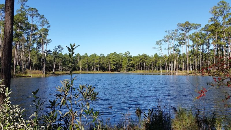Open pond