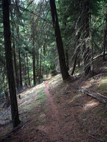 The Little Badger Trail on the ridge above Little Badger Creek