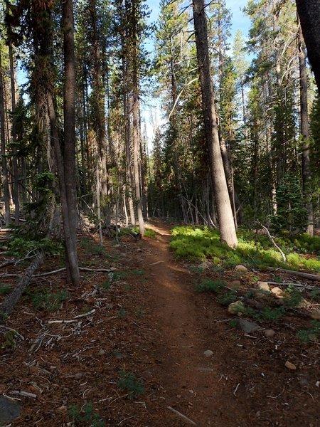 Along the Fourmile Lake Trail
