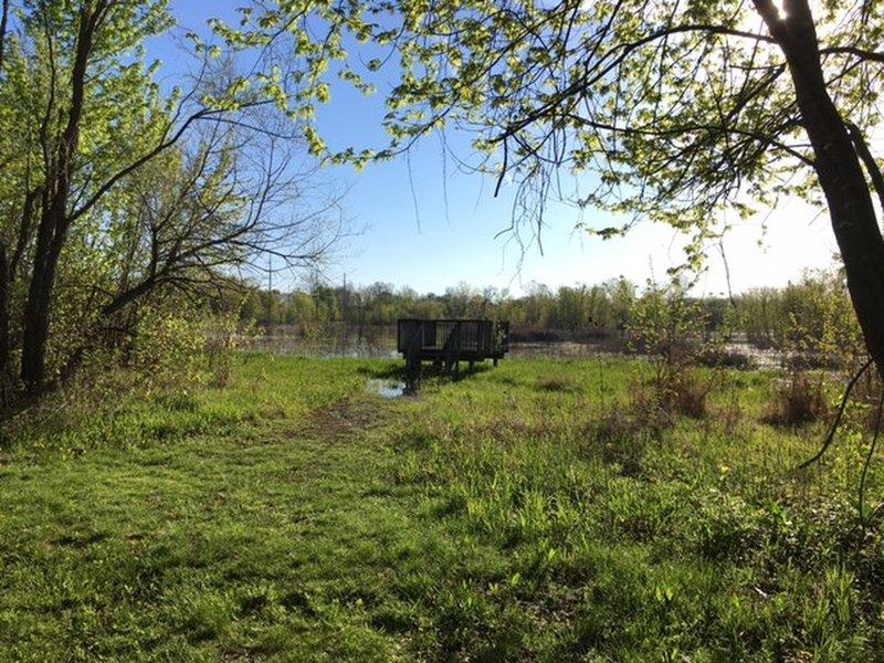 Marsh Observation Platform