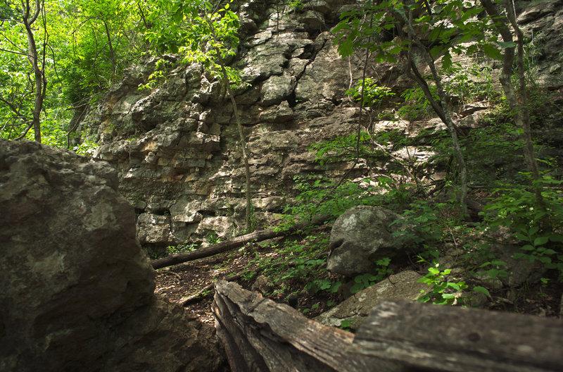Springfield Nature Walk