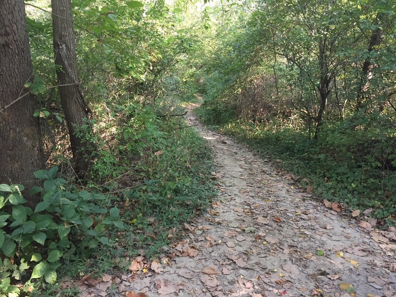 Dogwood Hill Trail where it connects to the First Avenue Loop