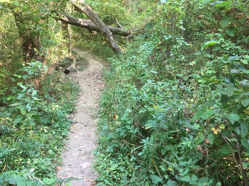 Dogwood Hill Trail obstacle.