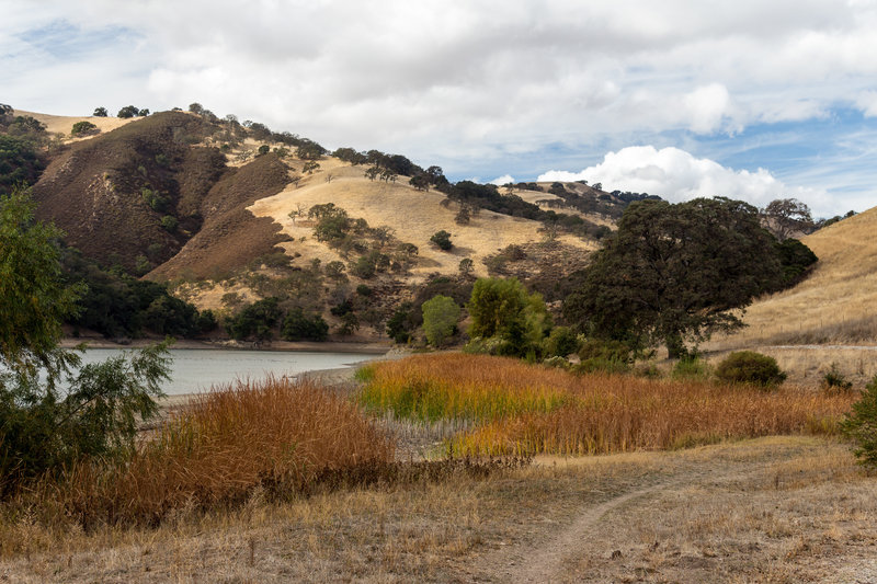 Reed on the east shore of Lake Del Valle