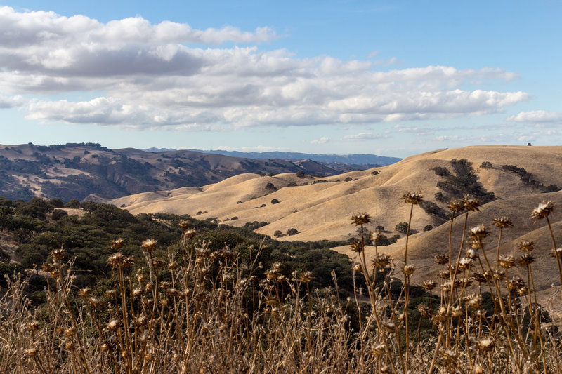 Del Valle hills through the thistles