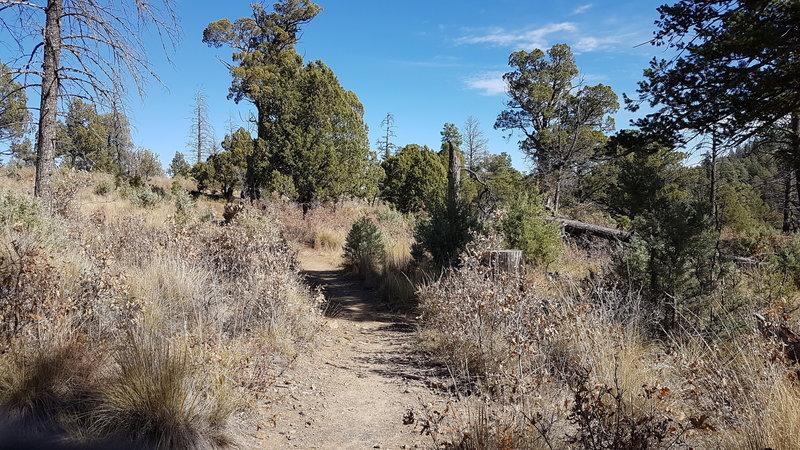 Trail in November.
