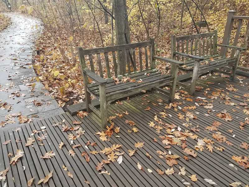 A place to sit and enjoy autumn in November-Woodland Garden at Powell Gardens