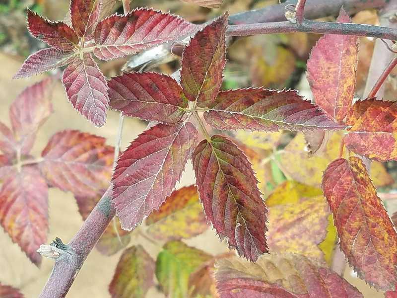 Autumn Color-Heartland Harvest Garden at Powell Gardens