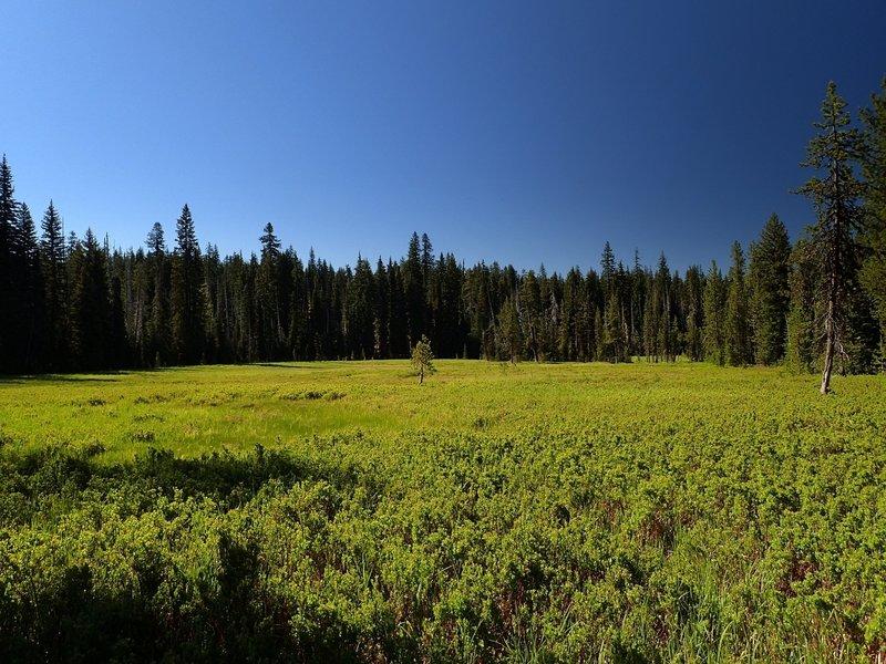 Sphagnum Bog near Crater Springs