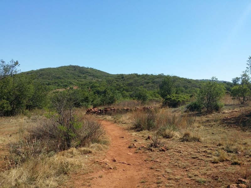 A view from the Kiepersol Trail.