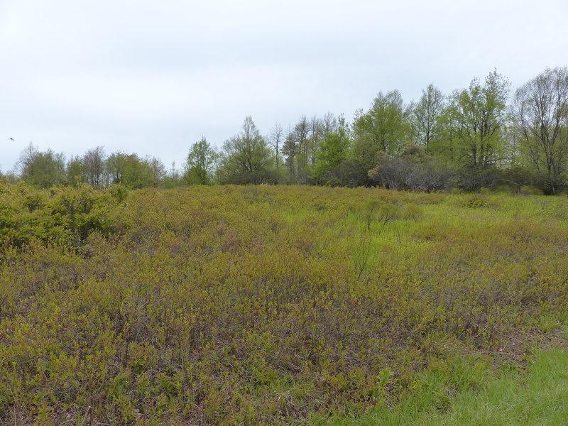 Helipad field on Mt Tammany Fire Road