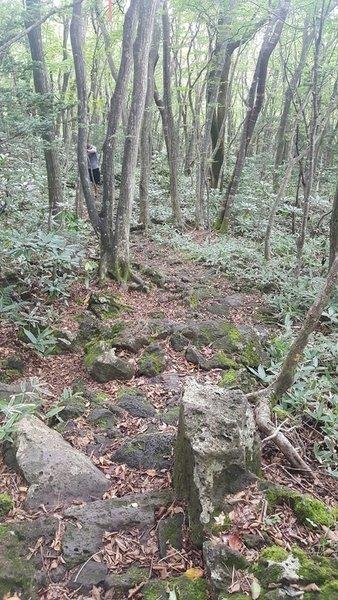 Donnaeko Trail Woods