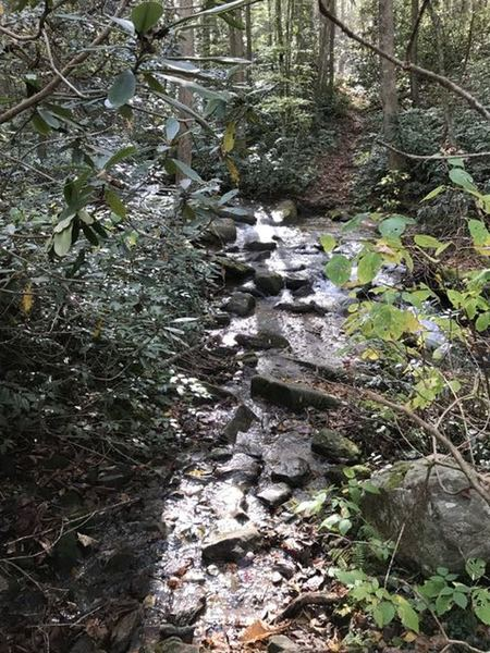 Parts of the trail are combination of stream bed. Trail has a chance of getting some feet wet. Because of under brush, path of least resistance is the trail.
