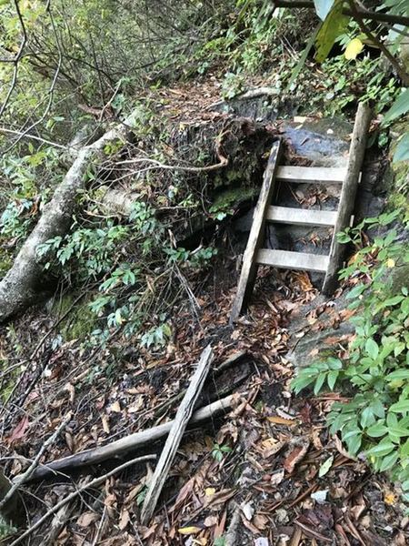 A view of the narrow trail and one of the small ladders found along the trail. There are larger ones as well in sections to climb up or down.