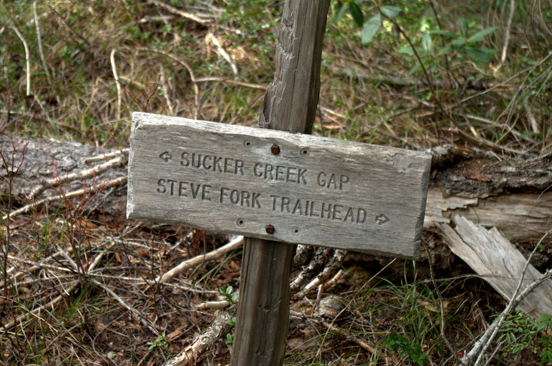 At the junction of the Steve Fork and Sucker Gap Trails