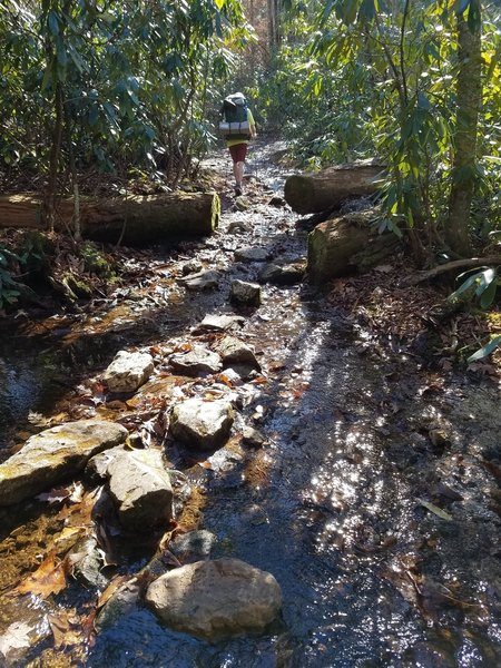 Trail and shallow brook coincide