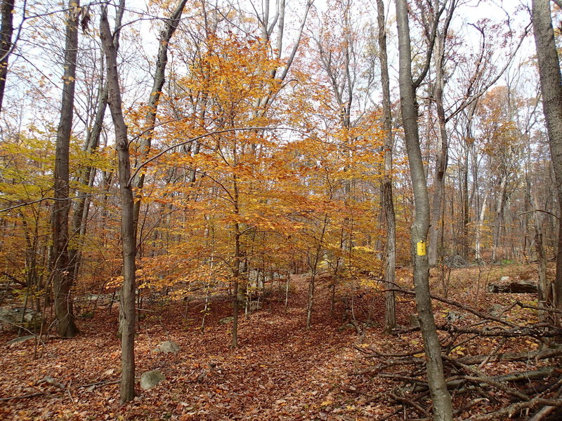 Timberbrook Trail