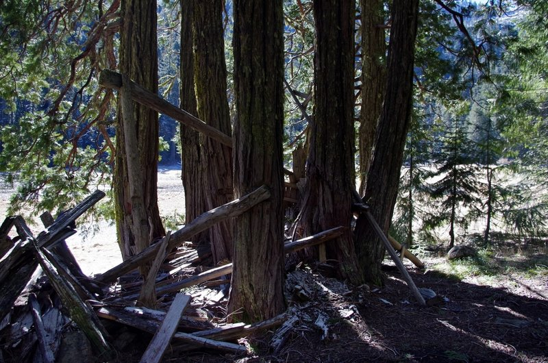 Remains of John McCloy's cedar shelter at Frog Pond