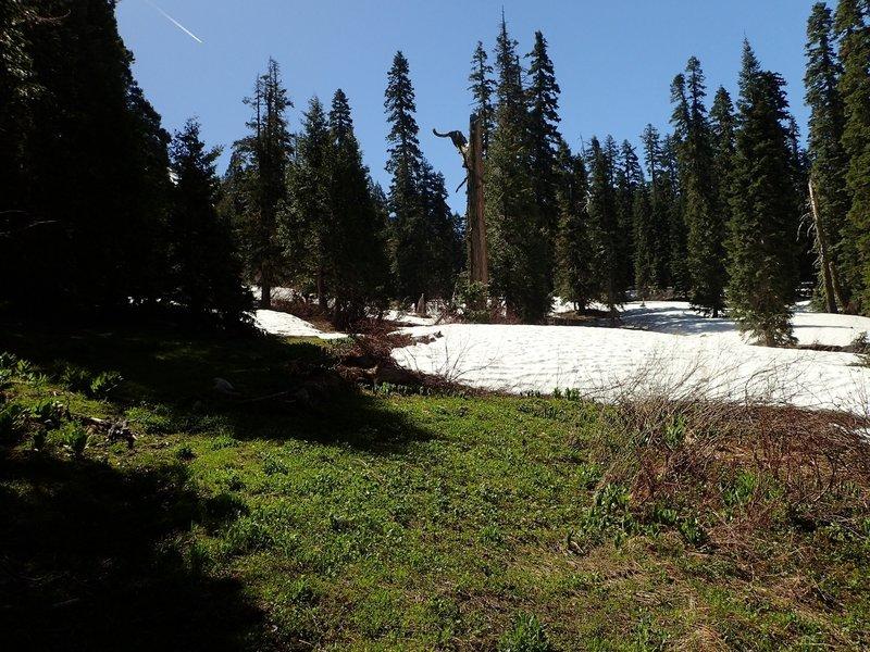 Entering the high meadow below Echo Lake