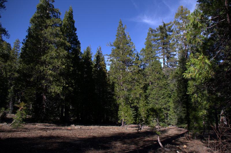 Cedar Basin