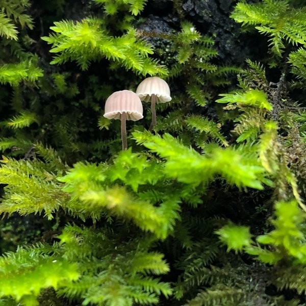 Keep an eye out for interesting mushrooms, lichen, and moss along the trail.