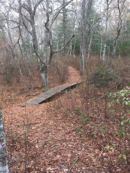 Start of the Pine Trail