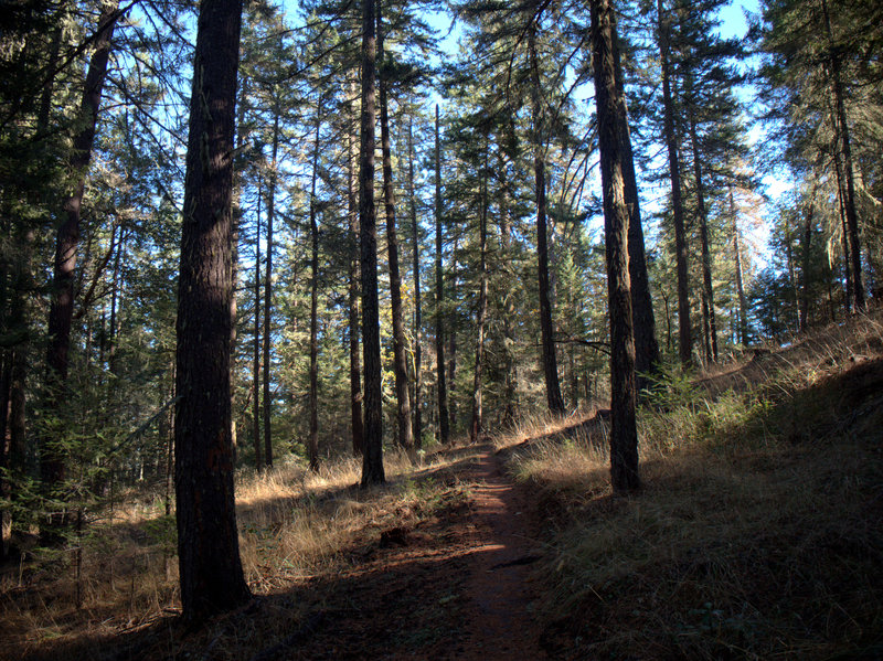 The trail traverses a forest on north-facing slopes