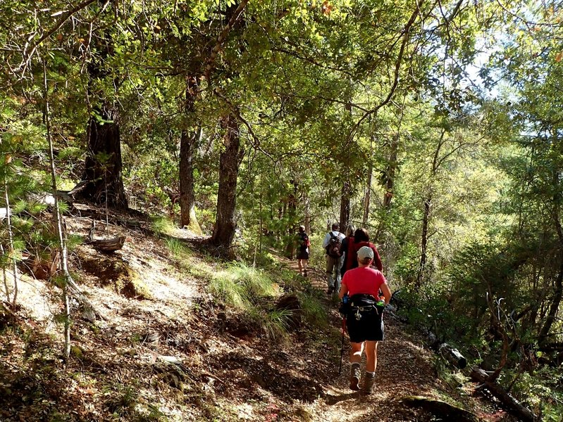 Through an oak and madrone forest on the #959 Trail