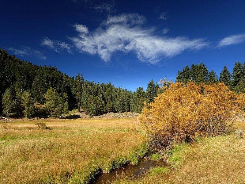 A meadow in Pine Creek Basin