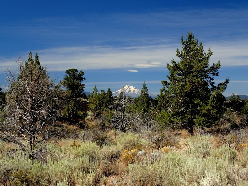 Mount Shasta from the trail