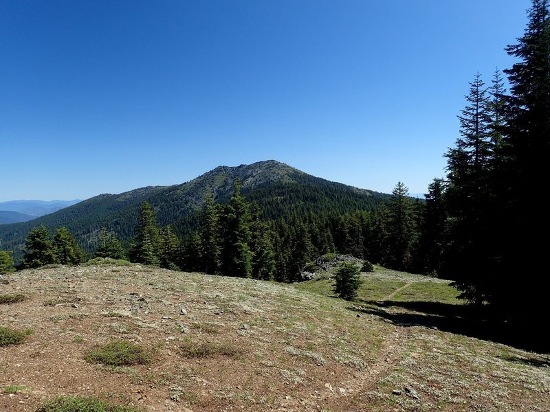 Grayback Mountain from the #1207 trail