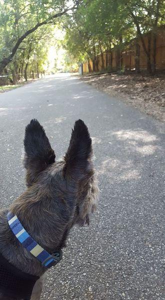 Halfway and looking back toward Hardberger Park