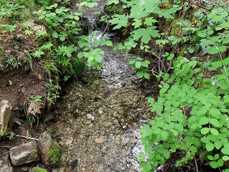 The small seasonal stream in Deming Gulch