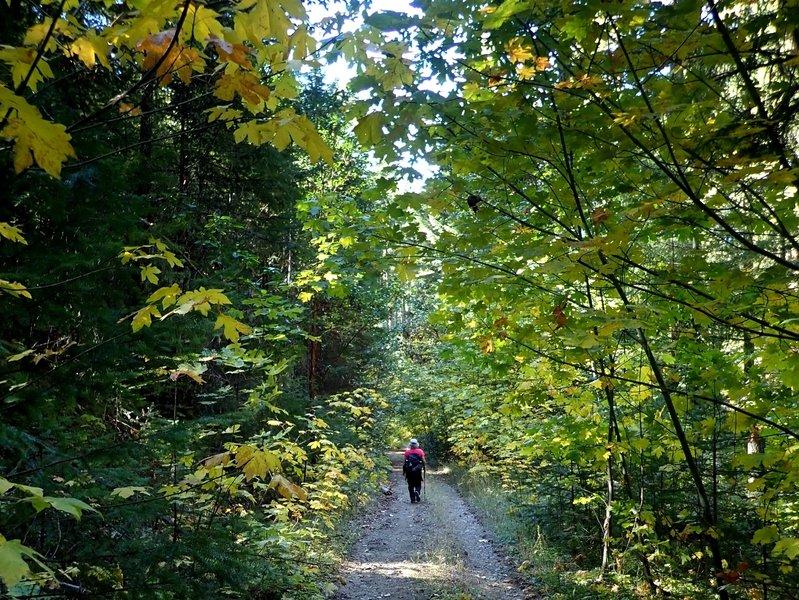 Along tree-shaded BLM Road 39-2-3