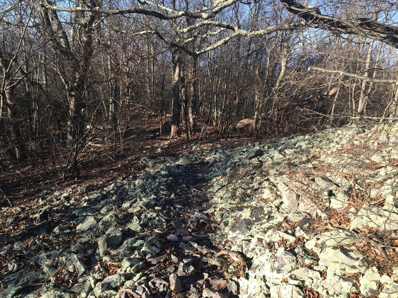 Some of the infamous VA rock fields can be found on the Furnace Mt trail.