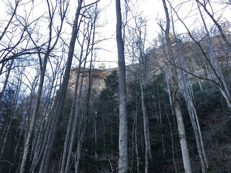 View through the trees off the rock garden trail looking up to lovers leap