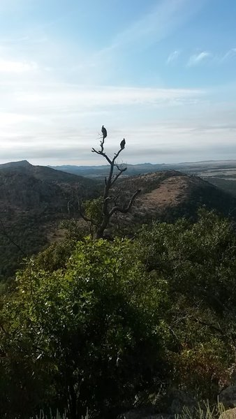 Buzzards on Mount Scott
