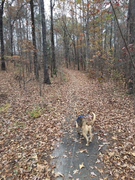 Trail is short, paved, and ideal for pets and runners.