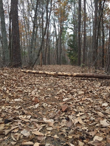 Surrounded by trees on this short trail.  The paved path gets covered with leaves in the fall, which can make it slippery.