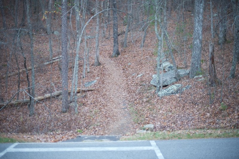 The trail as it crosses the road and enters the woods.