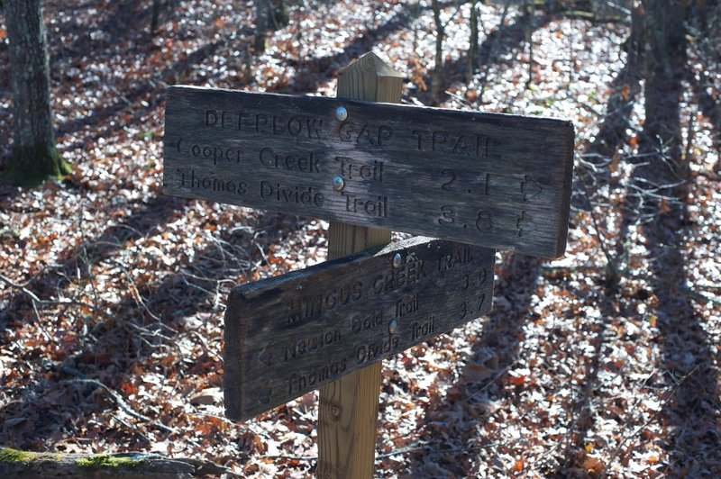 The Mingus Creek Trail where it intersects with the Deeplow Gap Trail.  This area is typical of the dry ridges found in the Smokies.