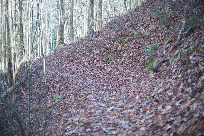 The Mingus Creek Trail is narrow in places, and can be covered in leaves in the Fall, as shown in this photo.