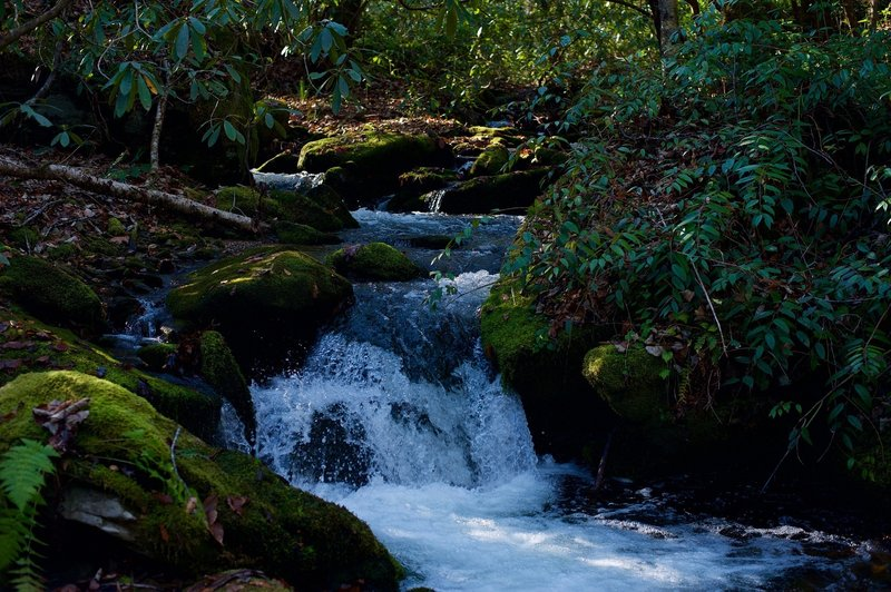 Mingus Creek runs alongside the trail, providing great opportunities to see small cascades as the creek makes its way down toward the Oconaluftee River.